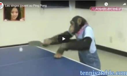 Les singes jouent au Ping Pong !