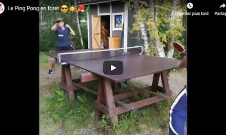 Ping-Pong en forêt