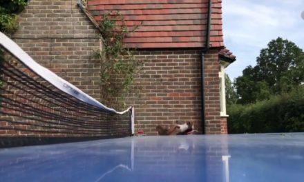 Humour : joue au Ping Pong avec ton chien !